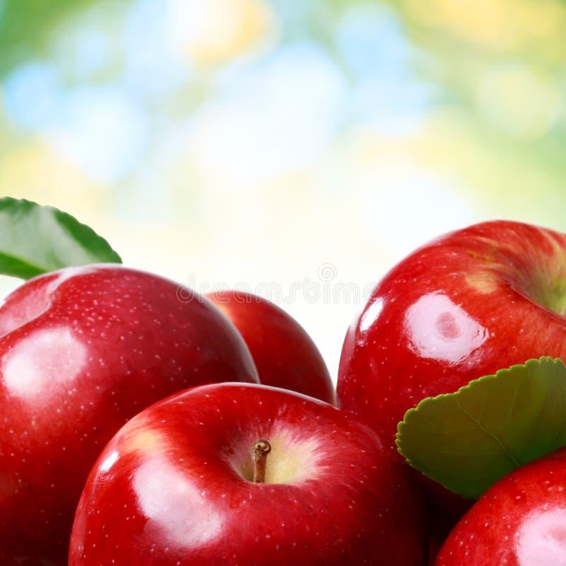 Verse appelen stock afbeelding