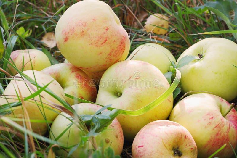 Verse appelen in gras stock foto's