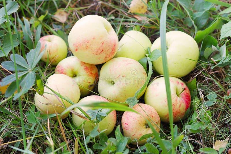 Verse appelen in gras stock foto