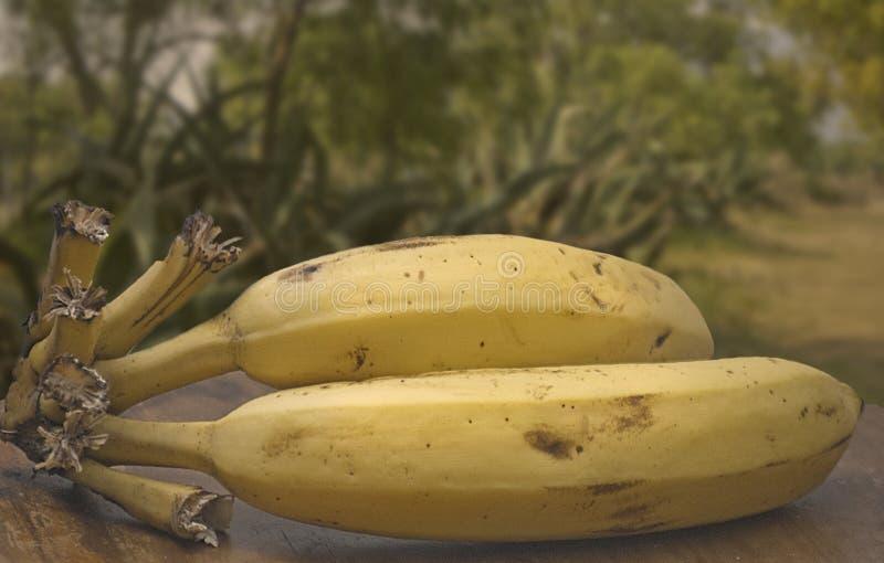 Verse Bananen stock foto's