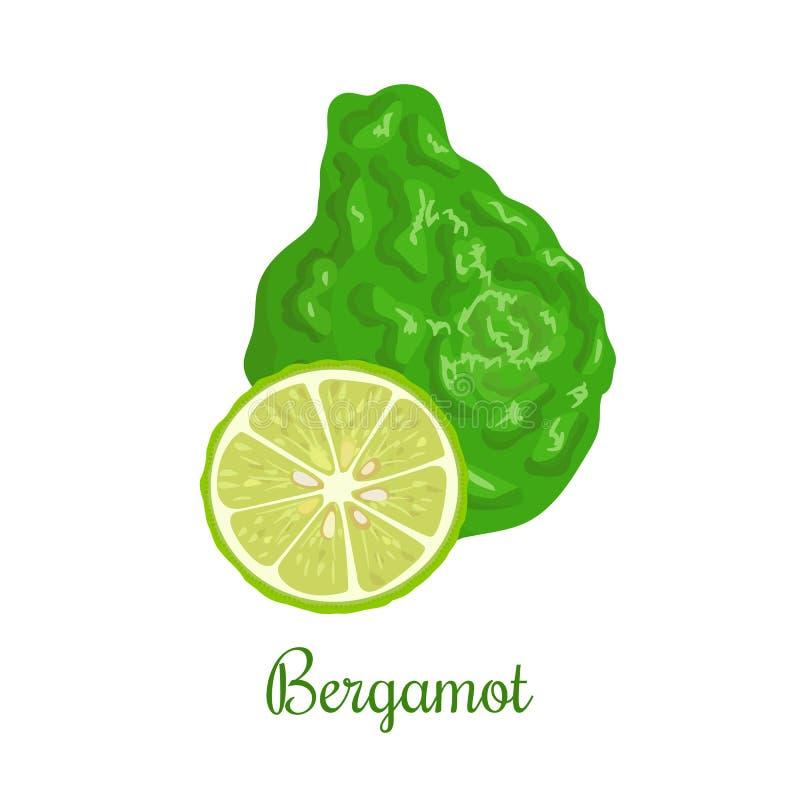 Verse bergamot of Citrusvruchtenbergamia Geheel en half royalty-vrije illustratie