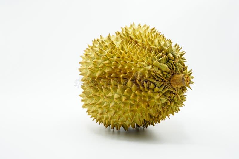 Verse Besnoeiing Monthong Durian op witte achtergrond, close-upmening van Durian, Monthong Durian Monleren riem Mooie Durian Duri royalty-vrije stock foto's