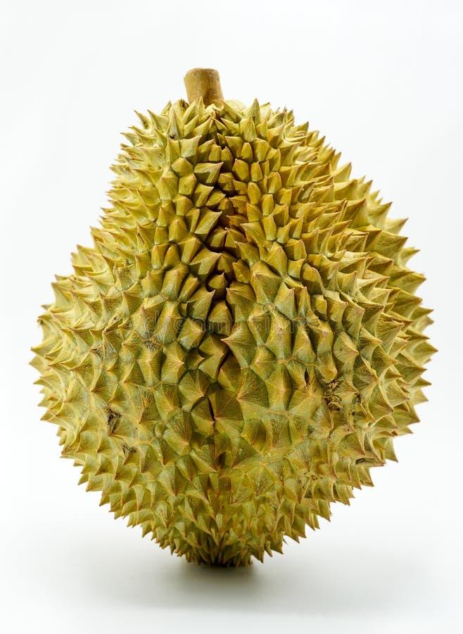 Verse Besnoeiing Monthong Durian op witte achtergrond, close-upmening van Durian, Monthong Durian Monleren riem Mooie Durian Duri stock foto's