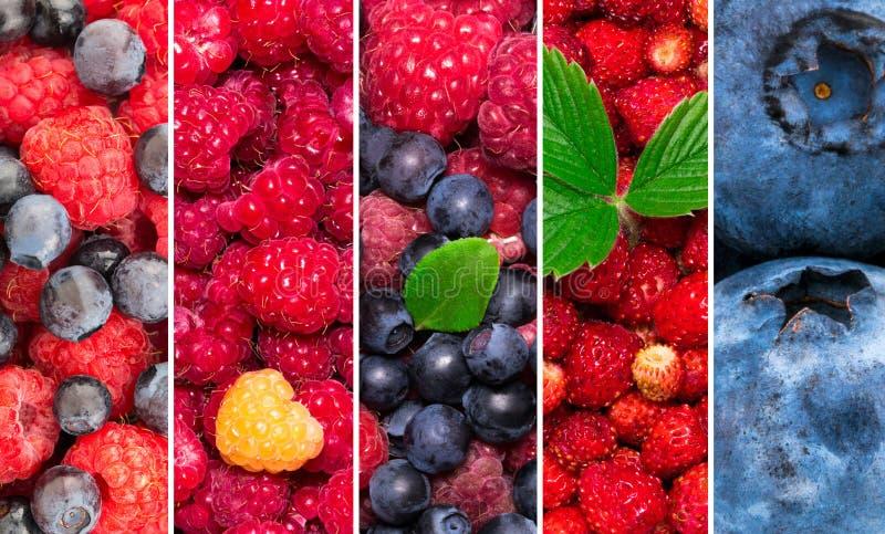 Verse Bessen Gemengd van bosbes, aardbei, frambozen Collage van vers kleurenfruit royalty-vrije stock fotografie