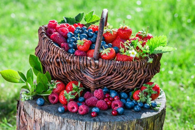 Verse bessen in tuin stock fotografie