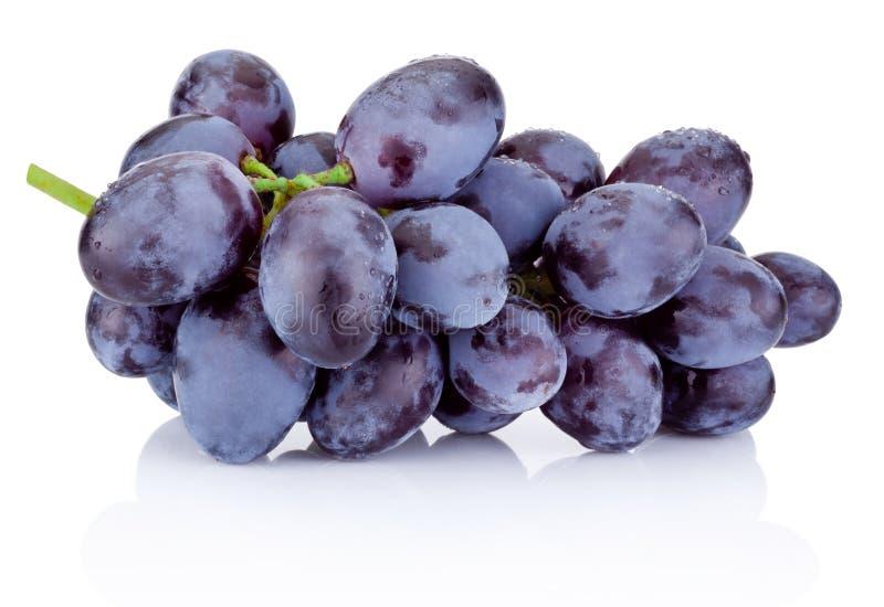 Verse blauwe die druiven op witte achtergrond worden geïsoleerd stock afbeelding
