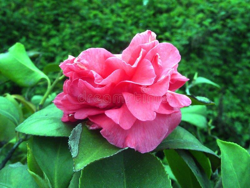 Verse bloem stock foto's