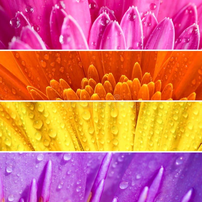 Verse bloembanner royalty-vrije stock afbeelding