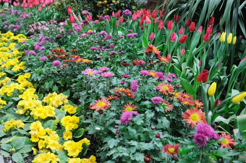 Verse bloemen royalty-vrije stock foto