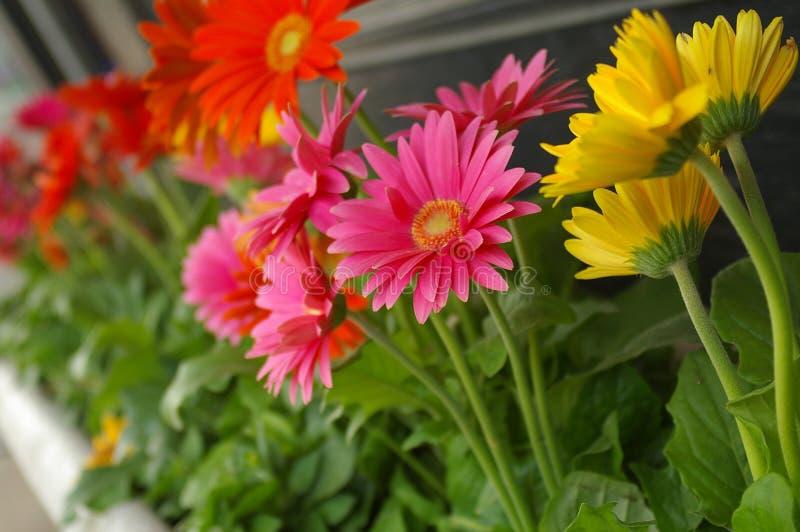 Verse bloemen stock afbeelding