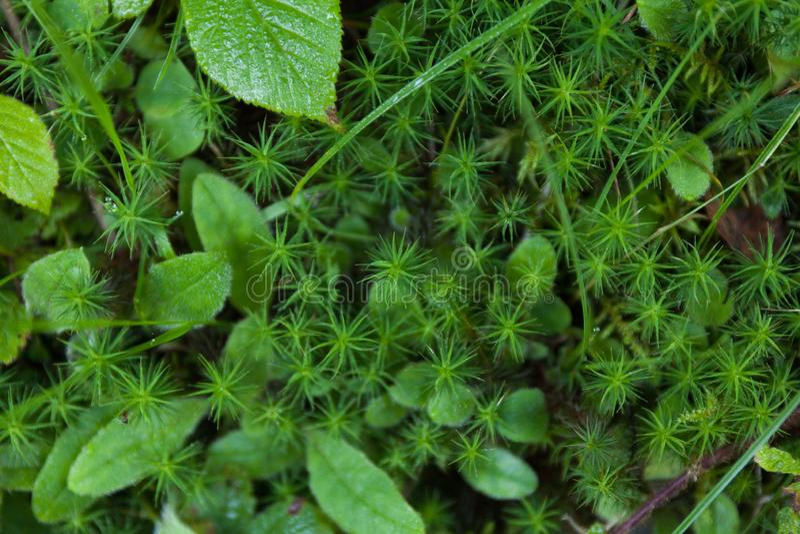 Verse bos groene tuin, de achtergrond van het versheidskruid royalty-vrije stock fotografie