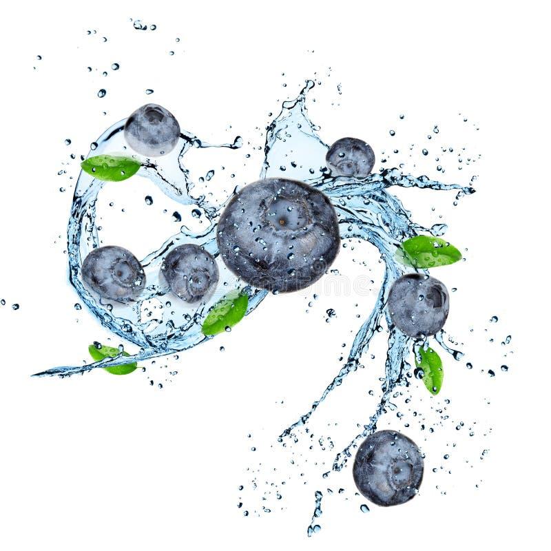 Verse bosbes met waterplons stock foto