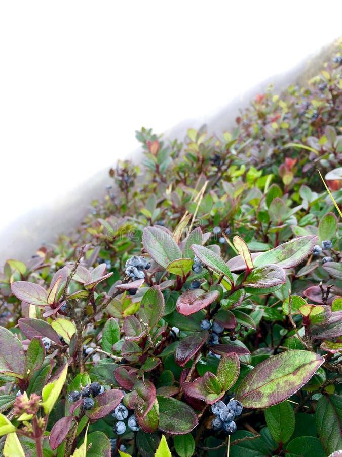 Verse bosbes op de heuvel met dikke mist in de winter stock foto