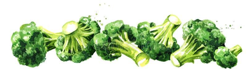 Verse broccoli Hand getrokken horizontale die waterverfillustratie, op witte achtergrond wordt ge?soleerd stock illustratie