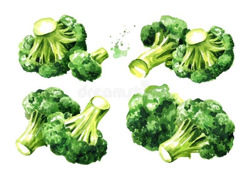 Verse broccolireeks Hand getrokken die waterverfillustratie, op witte achtergrond wordt ge?soleerd stock illustratie