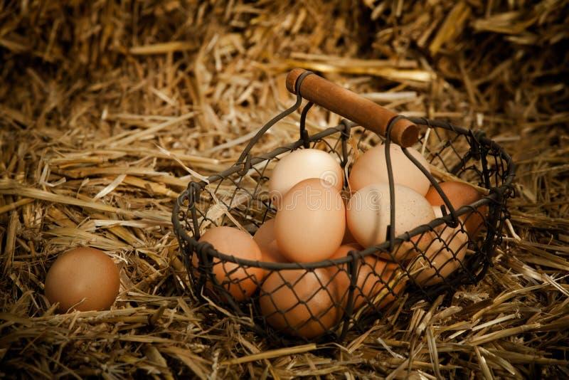 Verse bruine eieren in een metaalmand op stro royalty-vrije stock afbeeldingen