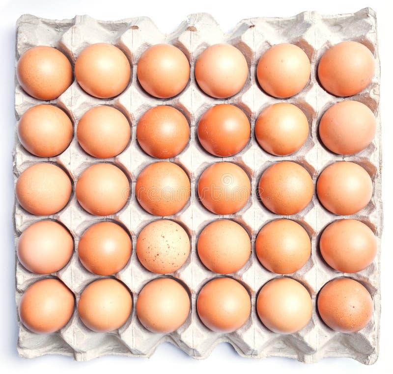 Verse bruine eieren in karton op witte achtergrond royalty-vrije stock foto