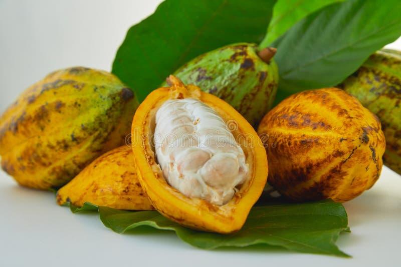 Verse cacaovruchten met groen blad royalty-vrije stock afbeelding