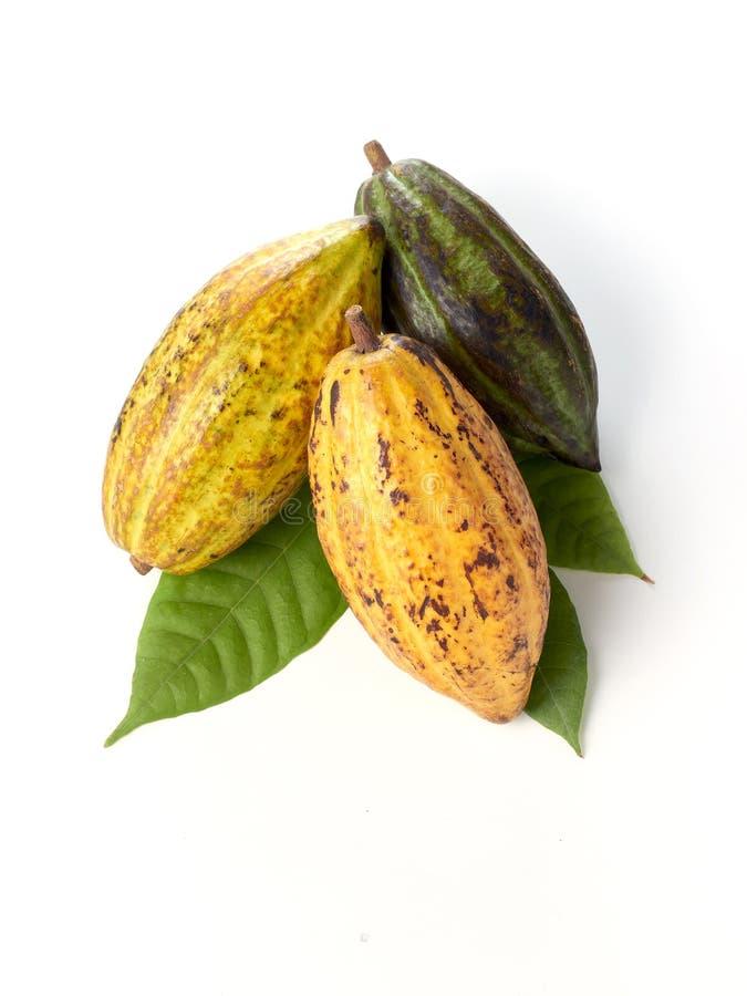 Verse cacaovruchten met groen blad stock foto's