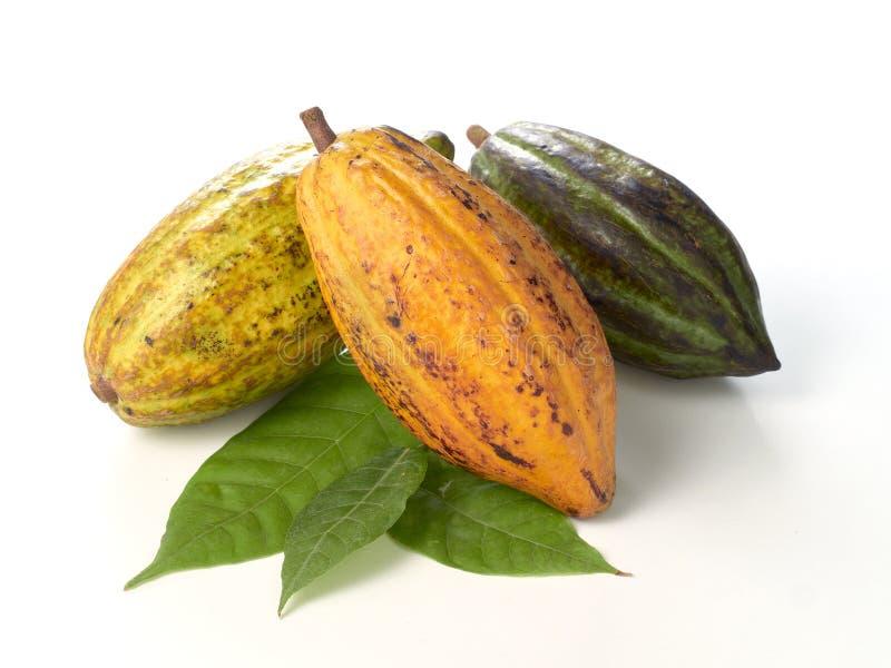 Verse cacaovruchten met groen blad royalty-vrije stock foto