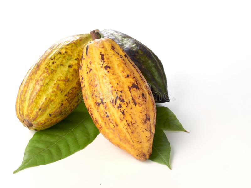 Verse cacaovruchten met groen blad royalty-vrije stock afbeeldingen