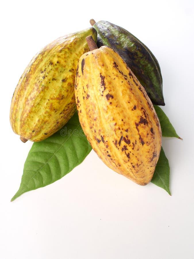 Verse cacaovruchten met groen blad royalty-vrije stock foto's