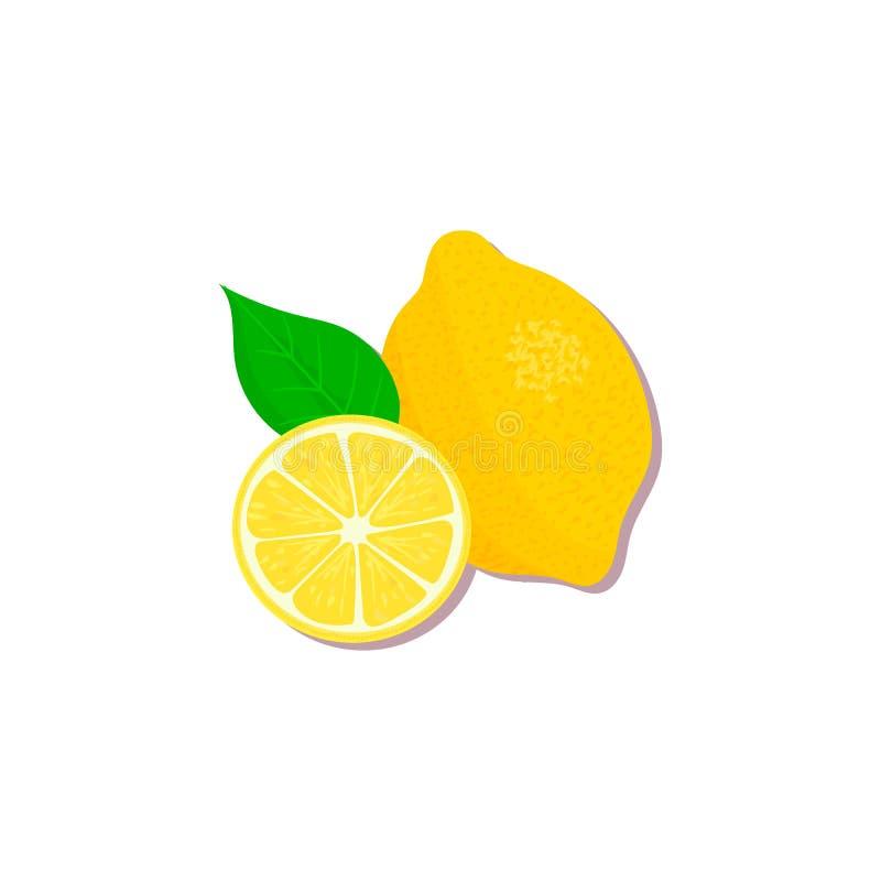 Verse Citrusvrucht sinaasappel, citroen, kalk, bergamot, mandarijn en grapefruit met bladeren en plakken stock illustratie