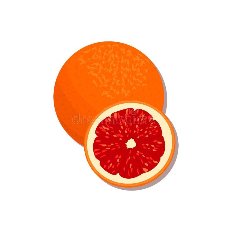 Verse Citrusvrucht sinaasappel, citroen, kalk, bergamot, mandarijn en grapefruit met bladeren en plakken royalty-vrije illustratie