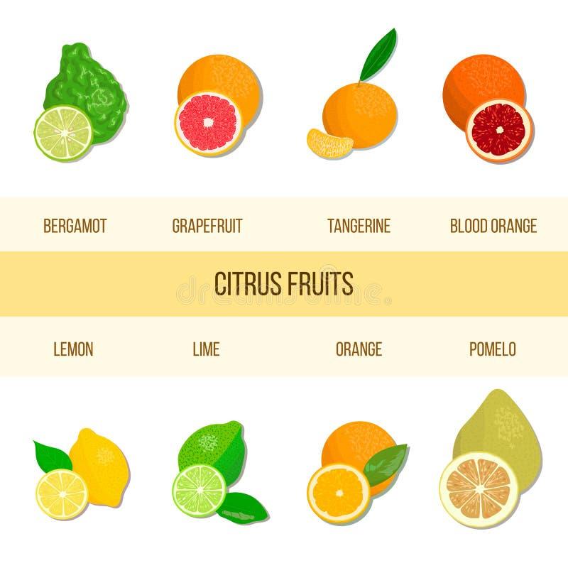 Verse citrusvruchtenreeks Bergamot, citroen, grapefruit, kalk, mandarin, pompelmoes, sinaasappel, bloedsinaasappel met plakken royalty-vrije illustratie