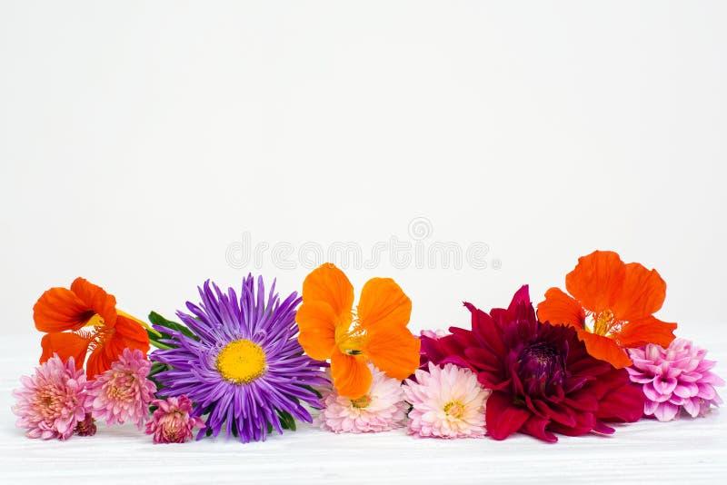 Verse de herfstbloemen stock afbeeldingen
