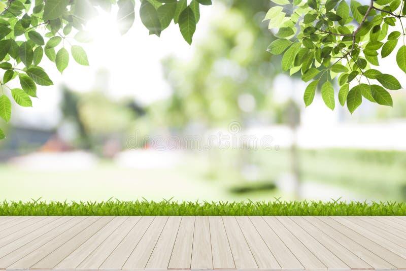 Verse de lente groene bladeren met blauw bokeh en zonlicht royalty-vrije stock foto's