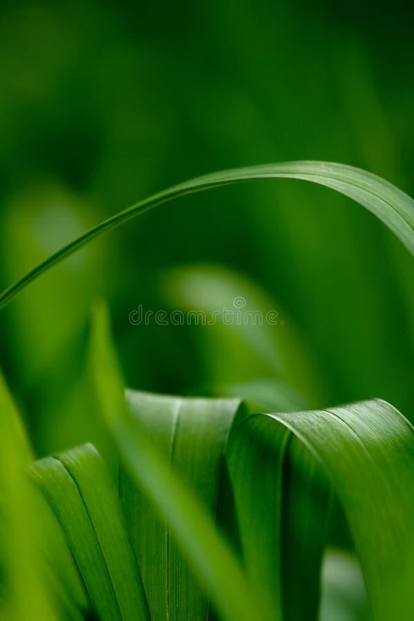 Verse de lentebladeren royalty-vrije stock afbeelding