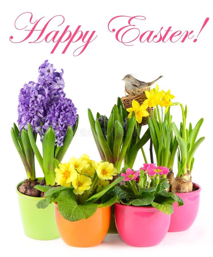 Verse de lentebloemen met vogelsnest. Pasen royalty-vrije stock foto