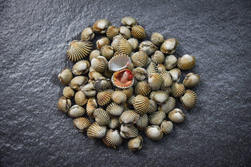 Verse de Zeevruchten donkere achtergrond van Kokkelsschaaldieren - ruwe bloedkokkel royalty-vrije stock afbeeldingen