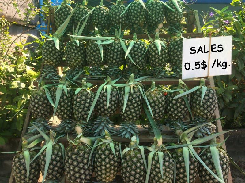 Verse die ananas uit de tuin wordt bijeengezocht royalty-vrije stock foto's