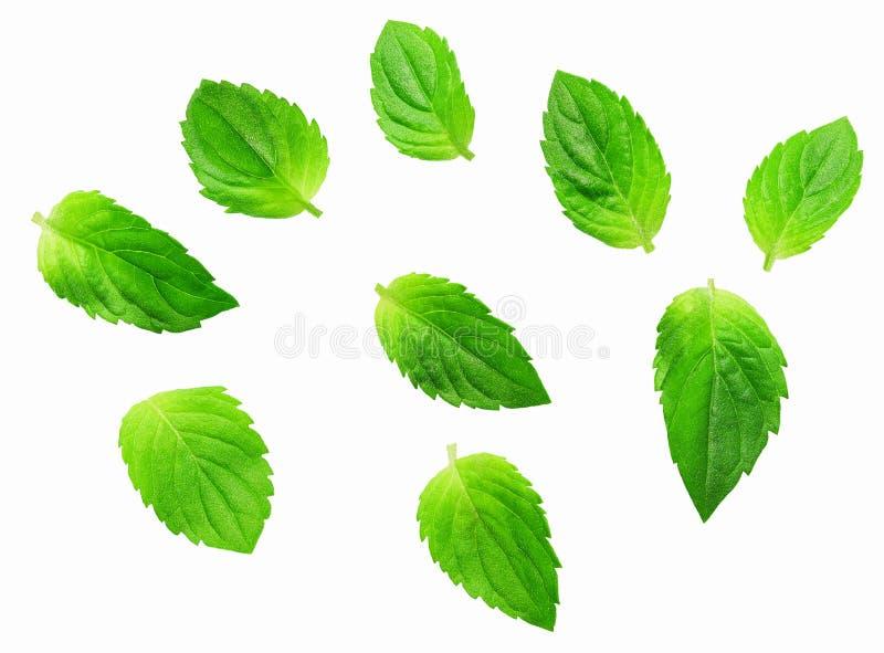 Verse die groene muntbladeren op de witte achtergrond worden ge?soleerd Munt, pepermuntclose-up stock afbeelding