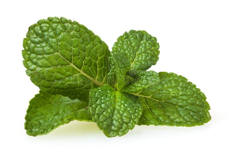 Verse die groene muntbladeren op wit worden geïsoleerd stock foto