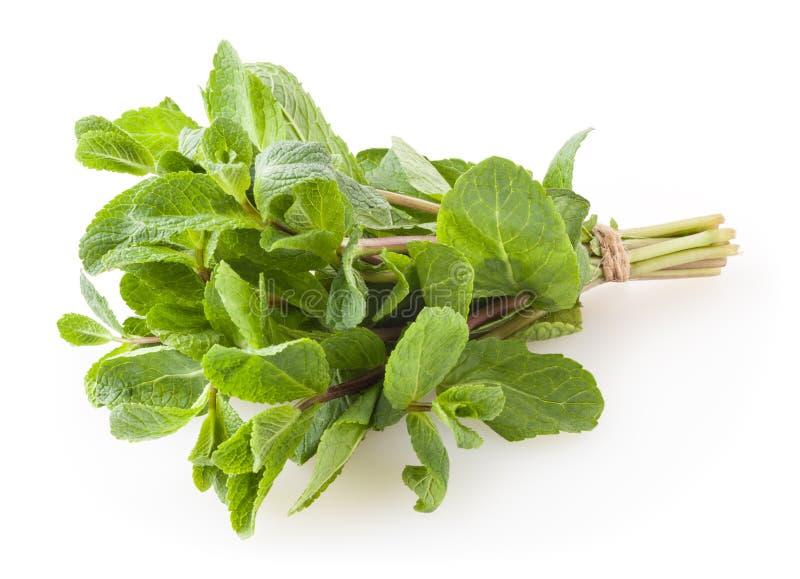 Verse die groene muntbladeren op wit worden ge?soleerd royalty-vrije stock afbeeldingen