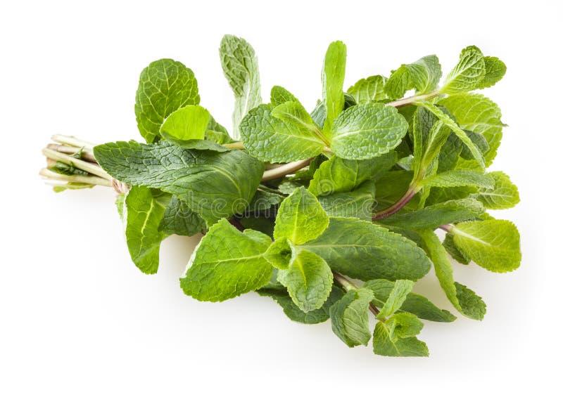 Verse die groene muntbladeren op wit worden ge?soleerd royalty-vrije stock afbeelding