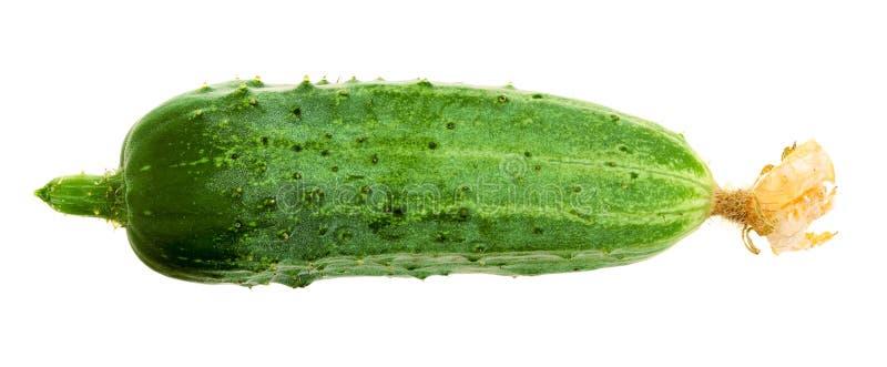 Verse die komkommer op witte achtergrond wordt geïsoleerd royalty-vrije stock afbeeldingen