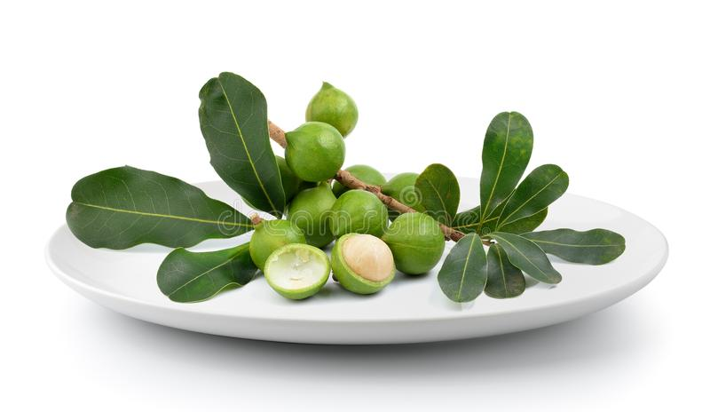 Verse die macadamia noot in plaat op een witte achtergrond wordt geïsoleerd stock foto's