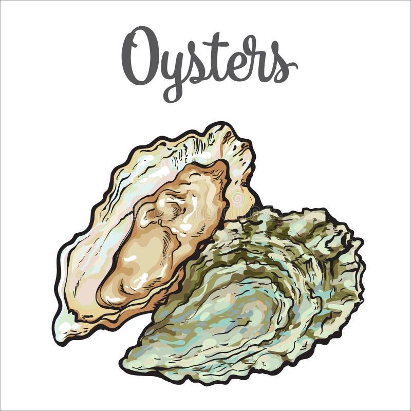 Verse die oester op een witte achtergrond wordt geïsoleerd vector illustratie