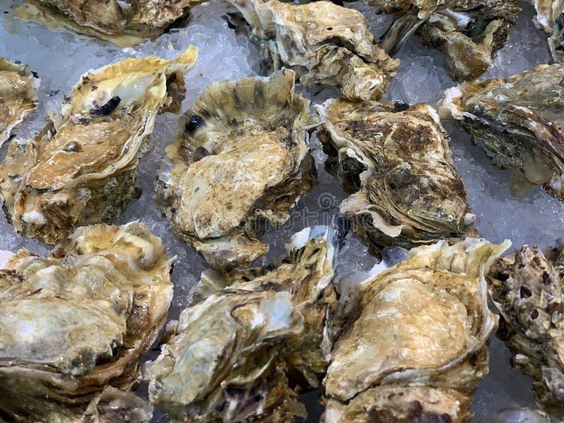 Verse die oesters op ijs worden gekoeld stock foto's