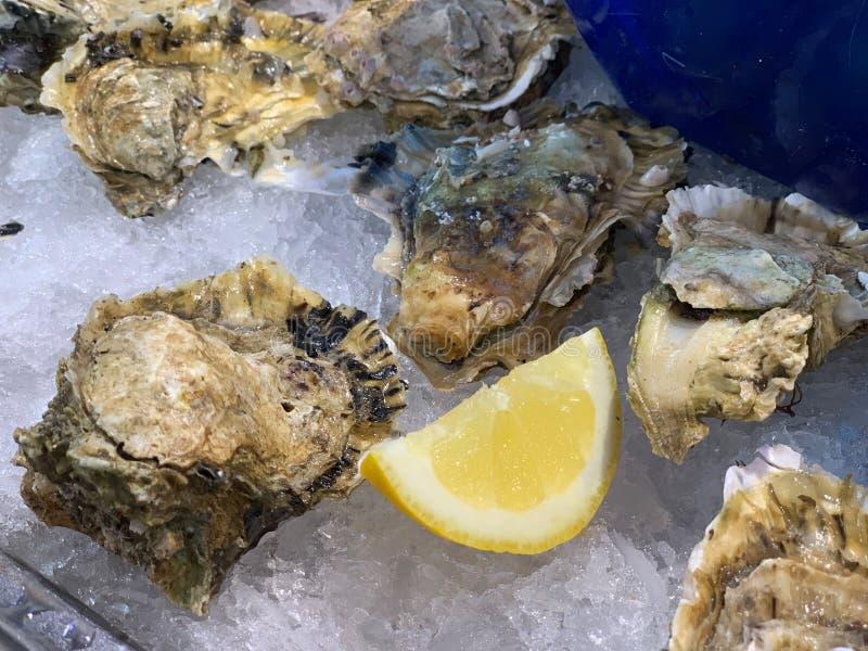 Verse die oesters op ijs worden gekoeld stock fotografie