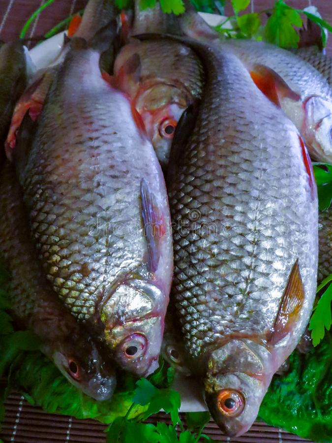 Verse die vissen in het meer op een plaat worden gevangen stock foto