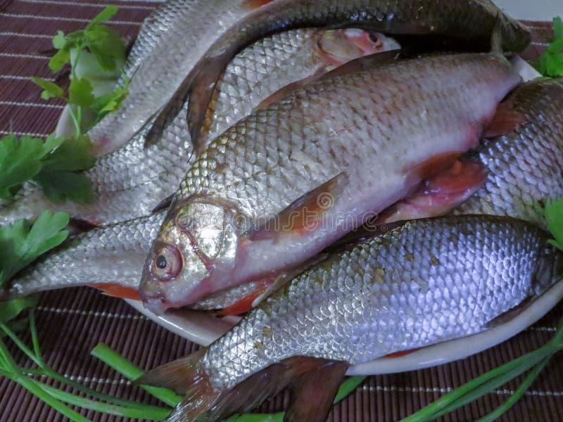 Verse die vissen in het meer op een plaat worden gevangen stock afbeelding