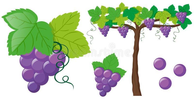 Verse druiven op de wijnstok royalty-vrije illustratie
