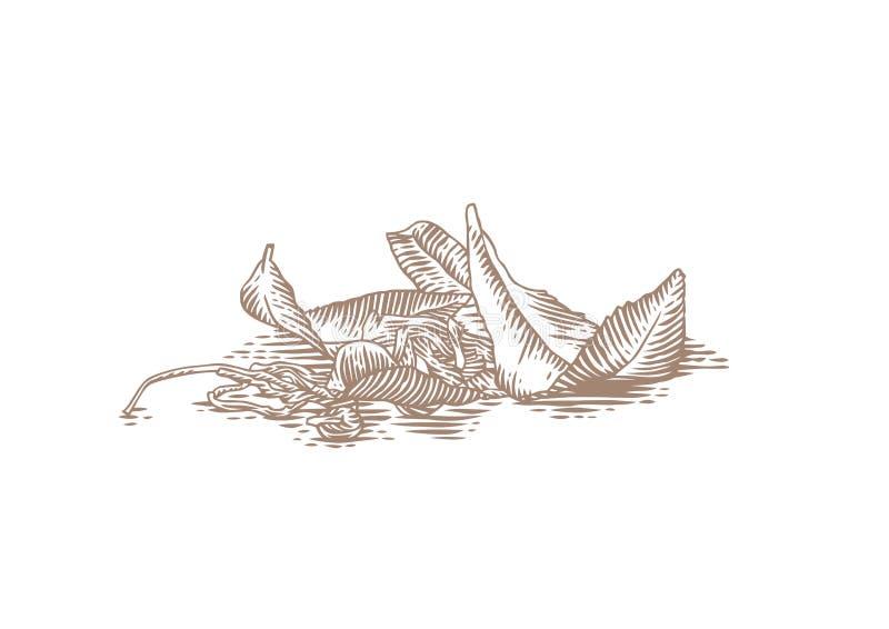 Verse en droge bladeren van thee royalty-vrije illustratie