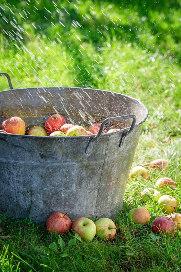 Verse en gezonde appelen in oude metaalwaskom stock afbeeldingen