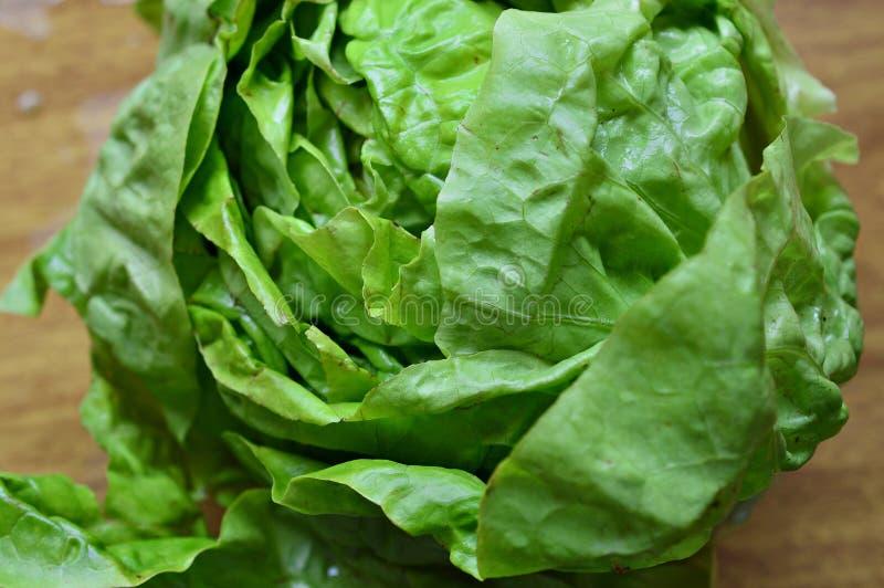 Verse en natuurlijke groene sla stock foto's